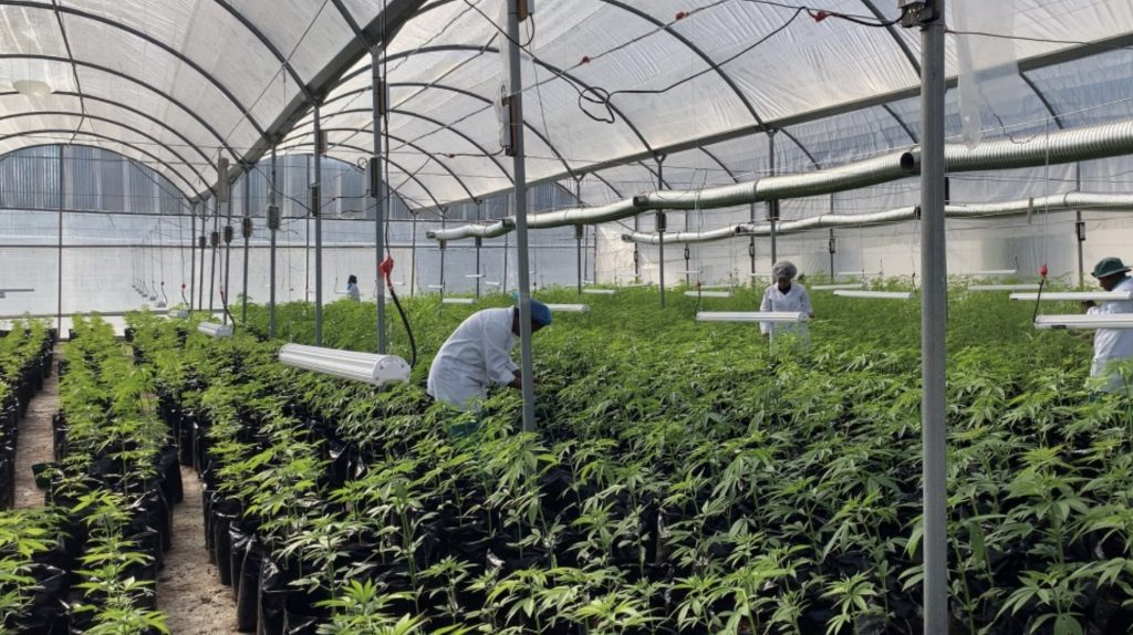 Cannsun Medhel cannabis pharmaceutical farm